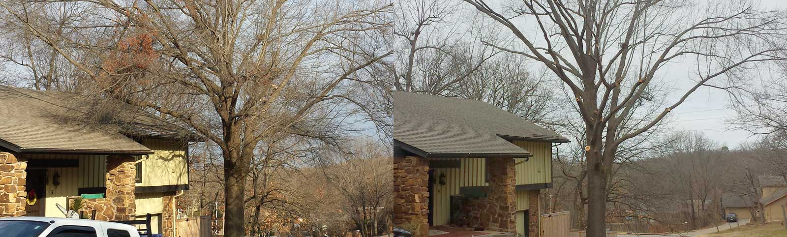 Tree Work: Before and After