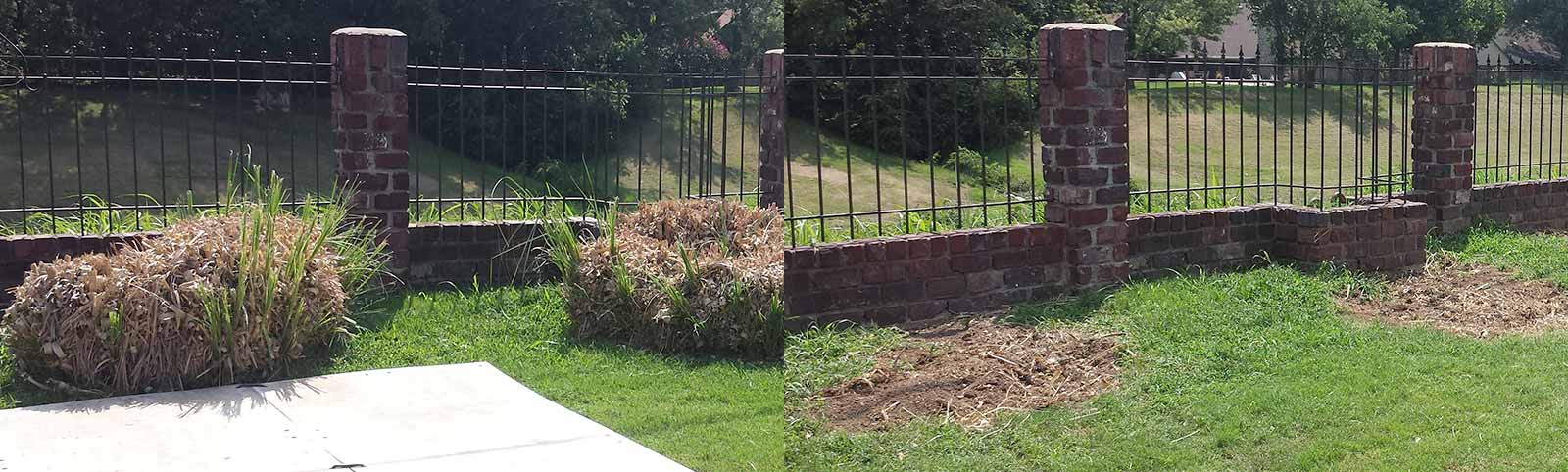 Ornamental Bush Removal: Before and After